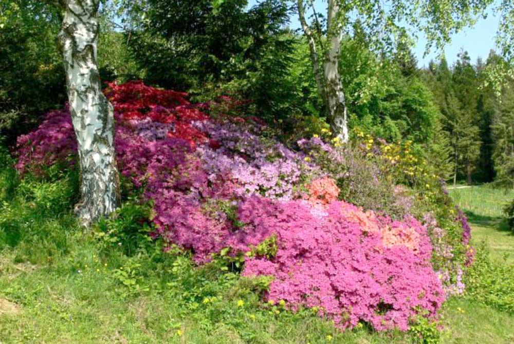 Budafapusztai Arborétum