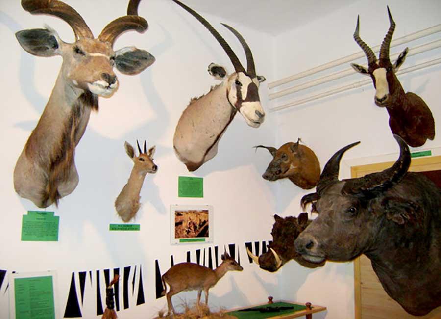 Őrségi vadászati kiállítás