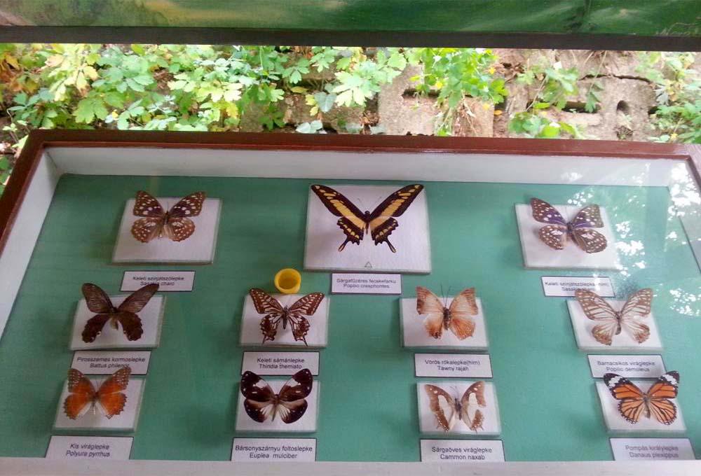 Lepkemúzeum Egerszalók