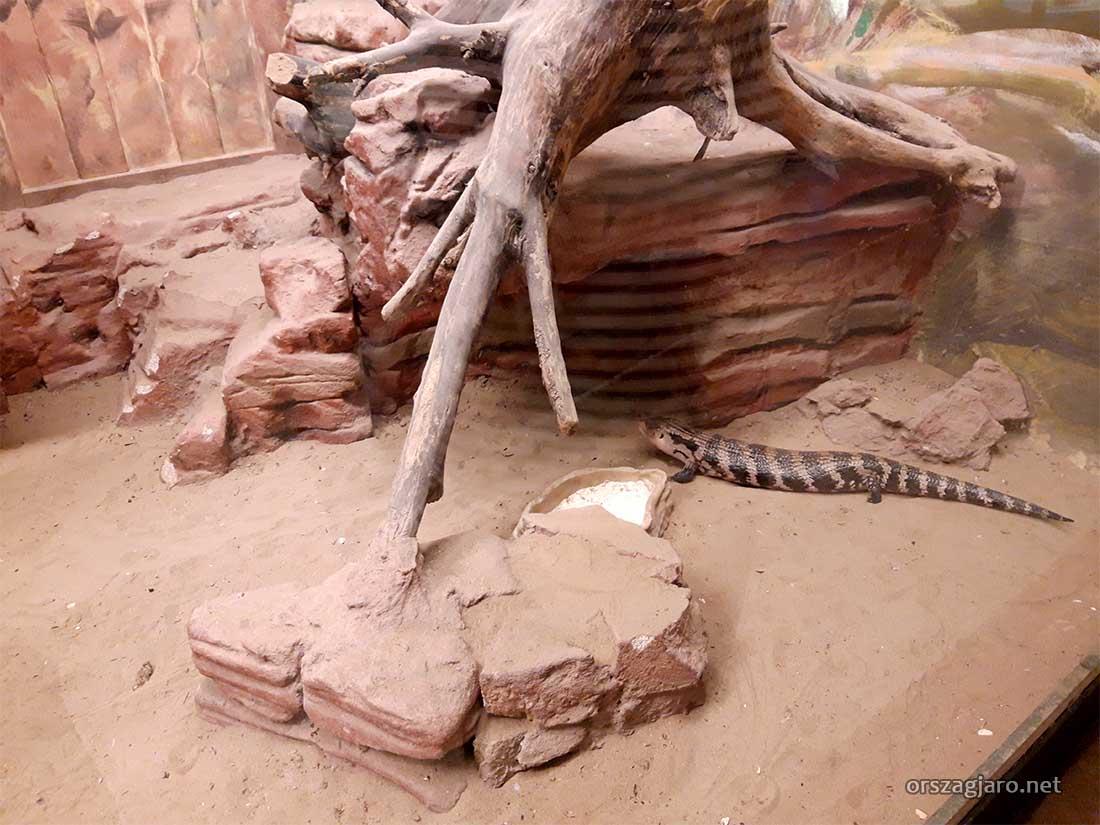 Ausztrál ház - Budapesti állatkert